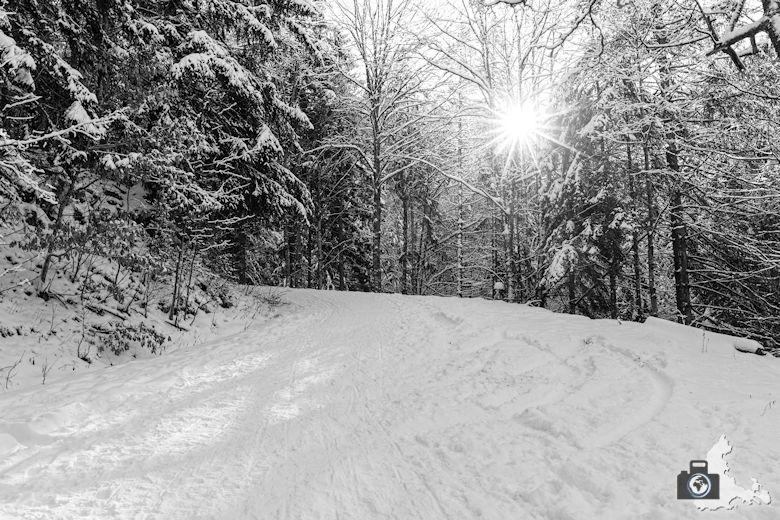 Fotowalk - Winterspaziergang im Münstertal - Wintersonne