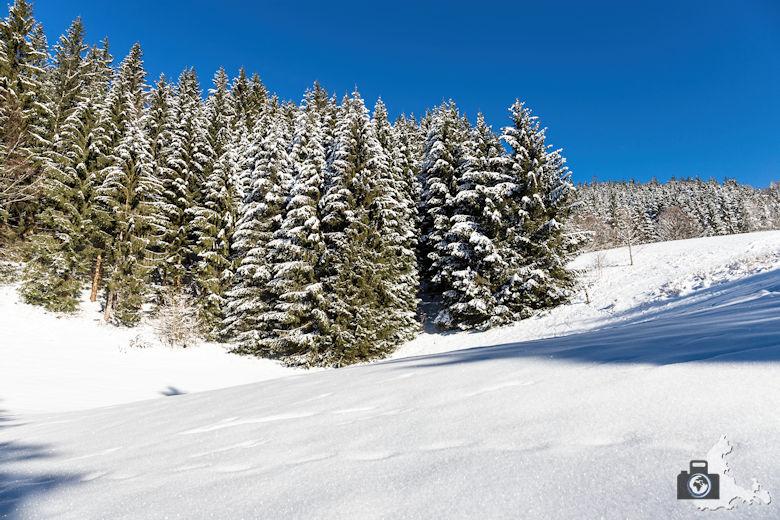 Fotowalk - Winterspaziergang im Münstertal - Weiße Tannen
