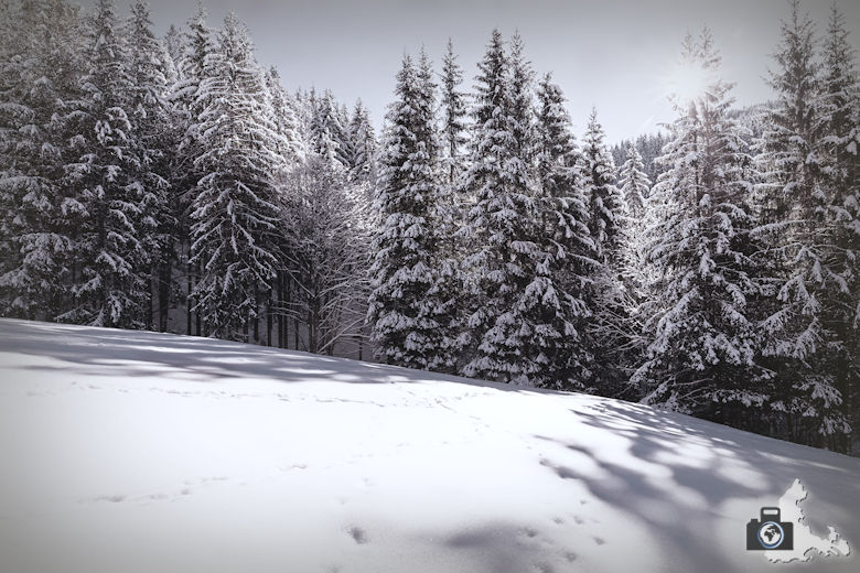Fotowalk - Winterspaziergang im Münstertal - Melancholie