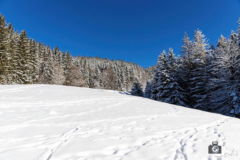 Fotowalk - Winterspaziergang im Münstertal - Lichtung