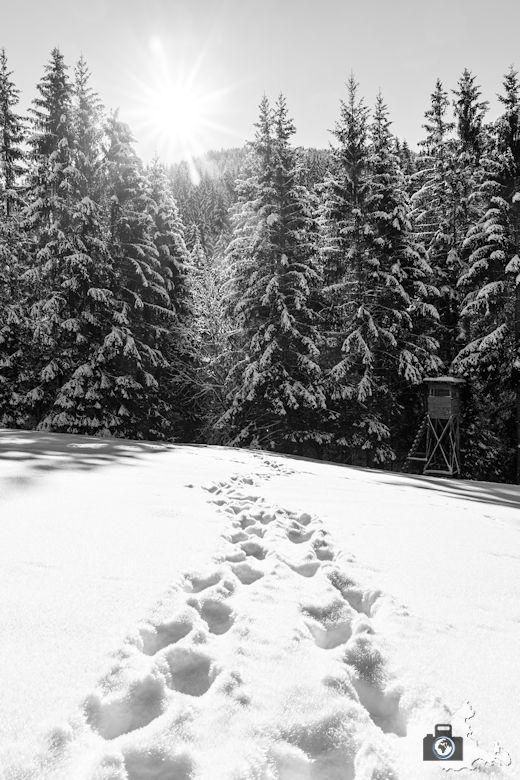 Fotowalk - Winterspaziergang im Münstertal - Spuren im Schnee
