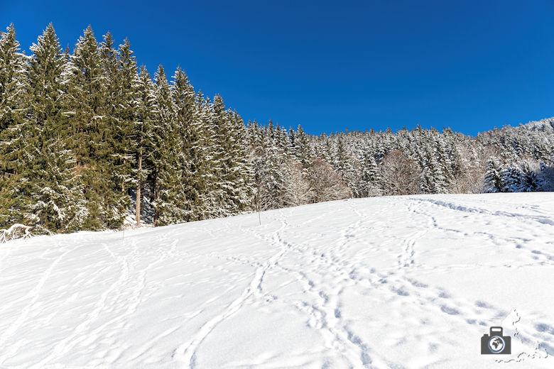 Fotowalk - Winterspaziergang im Münstertal - Winterweite