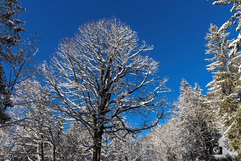 Fotowalk - Winterspaziergang im Münstertal - Baum im Winter