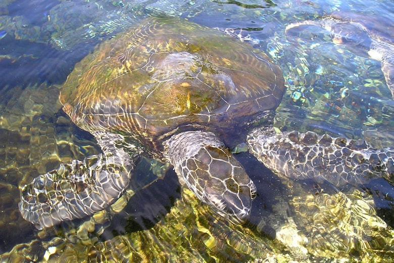 Steckbrief Samoa