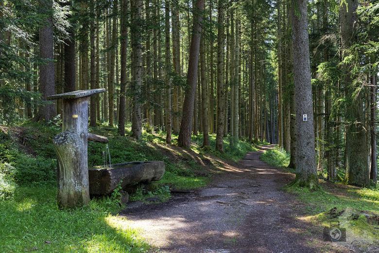 Schwarzwälder Genießerpfad - Waldpfad Groppertal - Brunnen