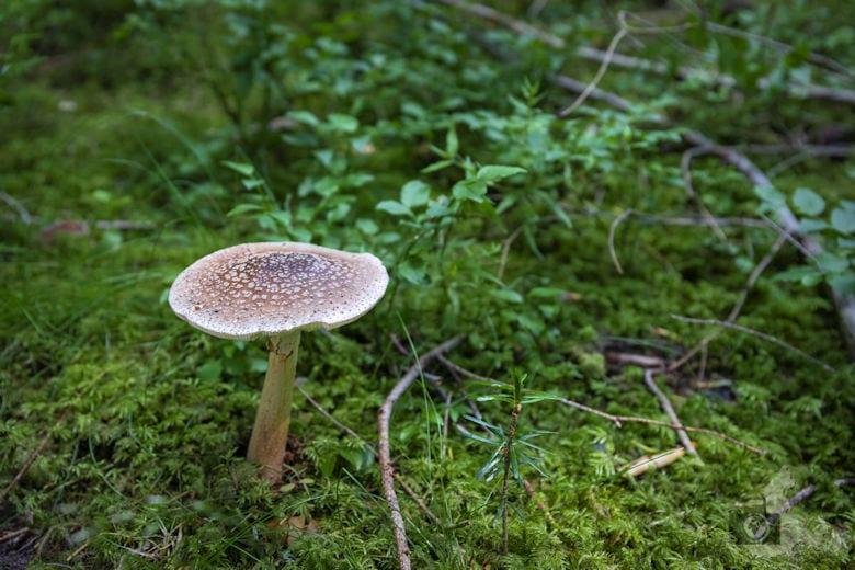 Schwarzwälder Genießerpfad - Waldpfad Groppertal - Pliz