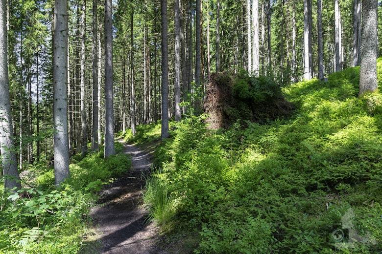 Schwarzwälder Genießerpfad - Waldpfad Groppertal - Wanderweg
