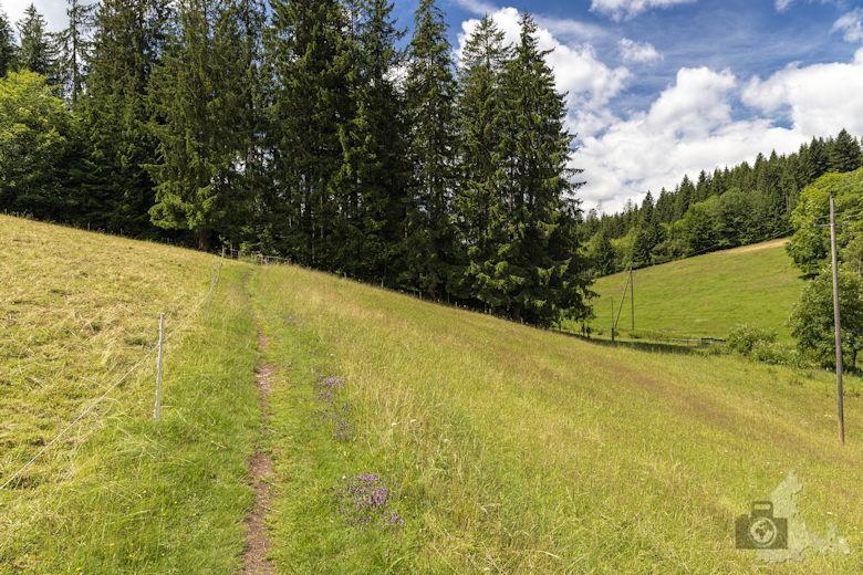 Schwarzwälder Genießerpfad - Waldpfad Groppertal - Wiese