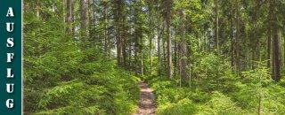 Schwarzwälder Genießerpfad - Waldpfad Groppertal - Wanderung